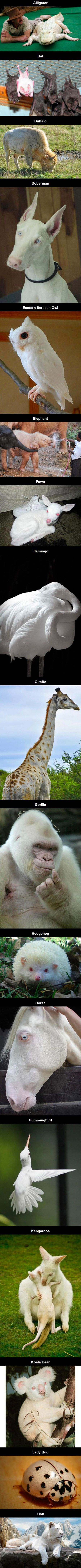 17 Rare Albino Animals. . .  Not sure about that.  The giraffe does not look albino. A few other animals also do not have the pink eyes.  Still fun to look at all the cute and pretty animals though.  :)
