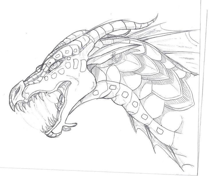 403 Forbidden Dragon Sketch Wings Of Fire Dragons Dragon Drawing