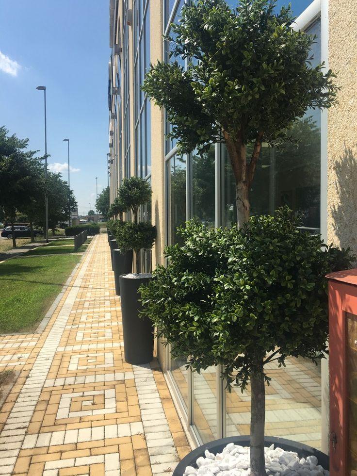 Oltre 25 fantastiche idee su arredamento piante da interni su pinterest decorazioni vegetali - Architetto interni milano ...