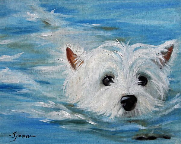 Swimming Westie! by Mary Sparrow. Custom pet portraits at www.marysparrow.com