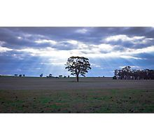 Lone Tree and a Curtain of Sunrays - Boort, Victoria Photographic Print
