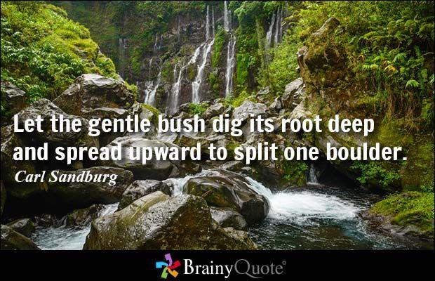 Let the gentle bush dig its root deep and spread upward to split one boulder. - Carl Sandburg #power #QOTD