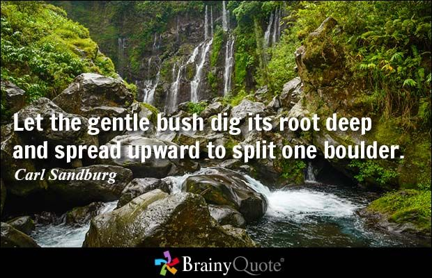 Let the gentle bush dig its root deep and spread upward to split one boulder. - Carl Sandburg #power #QOTD