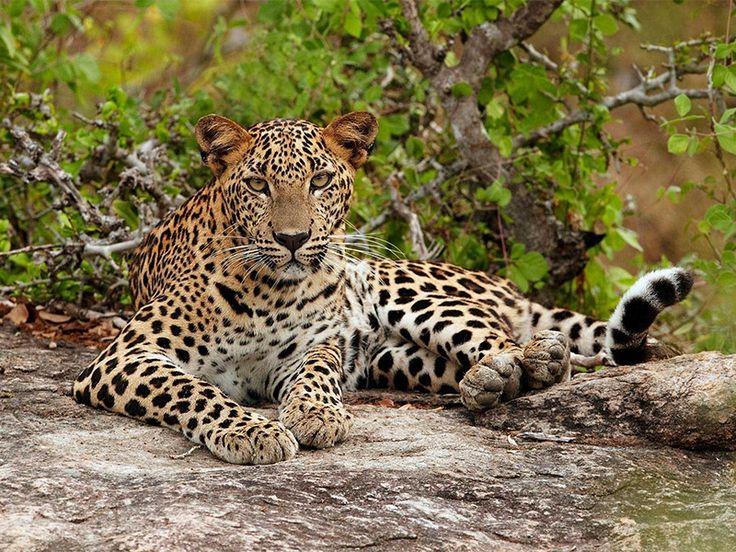 Jhajjar Bacholi Wildlife Sanctuary - in Punjab, India
