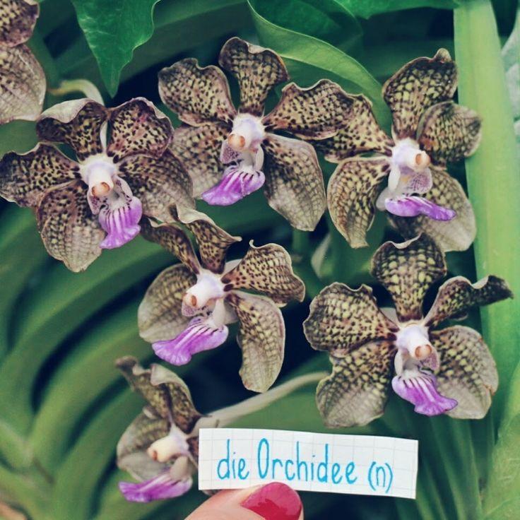 die Orchidee - orchid