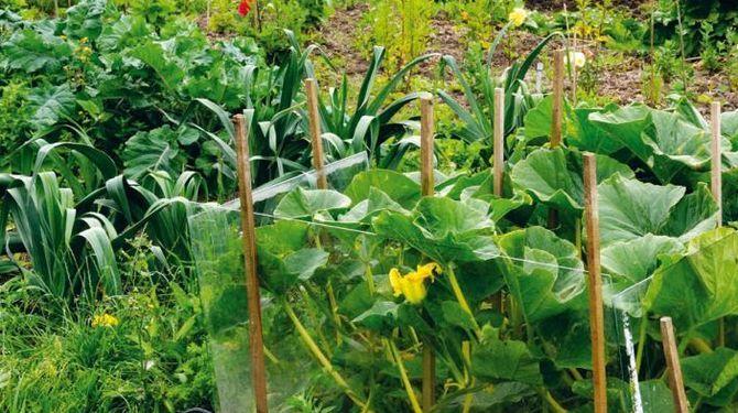 Prečo sa zelenine nedarí? Desať najčastejších chýb