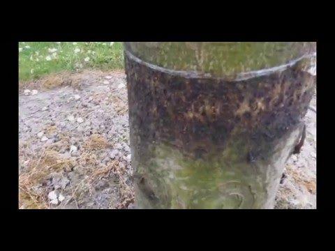 (6) hangyák ellen vegyszer nélkül - YouTube
