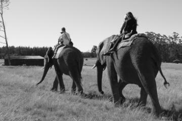 Parque dos Elefantes - Africa do Sul - TripTrends