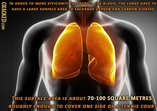 28 Facts About the Human Body That Will Blow Your Mind | Cracked.com