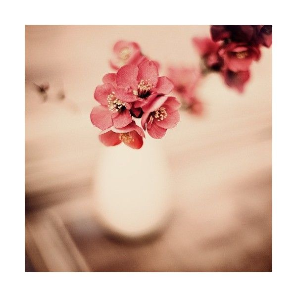 "imgfave | ""natures beauty"" image collection ❤ liked on Polyvore featuring pictures, backgrounds, flowers, photos and pics"