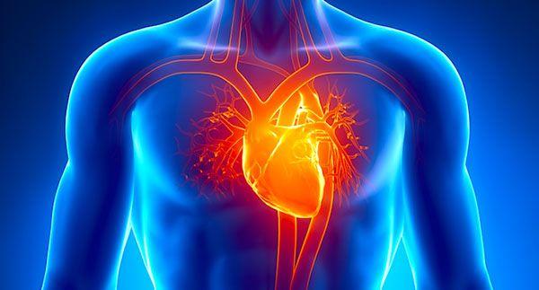 Herzinfarkt – Angina pectoris – Herzinsuffizienz – Bluthochdruck – Herz-Rhythmusstörungen – Andere Herzerkrankungen – Schlaganfall – Arterielle Durchblutungsstörungen der Beine – Demenz…