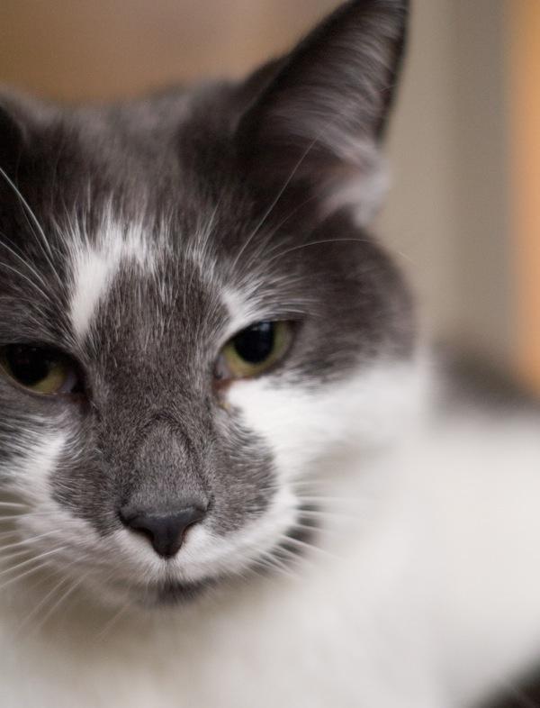 ^..^: Kittens Pics, Cat Crazzzzzzzzi, Adorable Cat, Cat Shots, Cat Photo, Divine Cat, Cat Sit, Cute Kittens, Kissabl Kitty