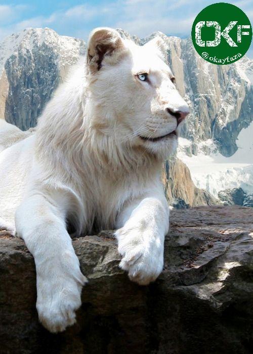 Okayfaza اوکی فضا Rare Albino Animals Albino Animals Animals