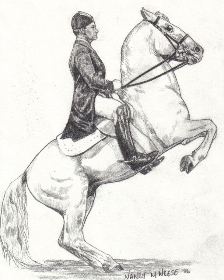 189 best horses art images on pinterest horse art equine art pencil drawing ccuart Gallery