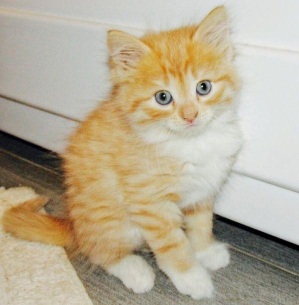 La rimozione degli odori da gatto (e non solo) di urina. <br /> La rimozione di urina avviene in due fasi.  In primo luogo, rimuovere ...