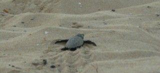 Volunteer with Turtles in Greece | GVI USA 2000$/2 weeks