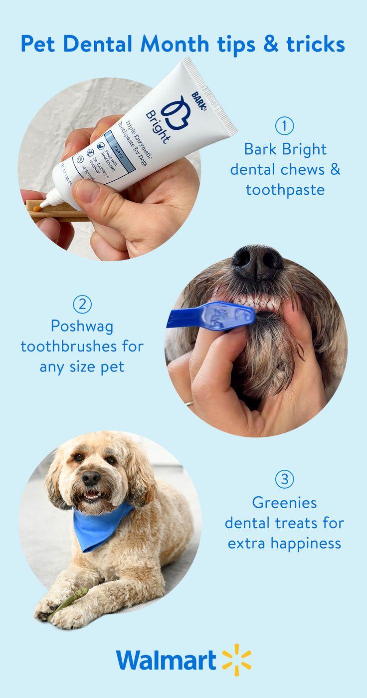 Pet Dental Month tips & tricks 