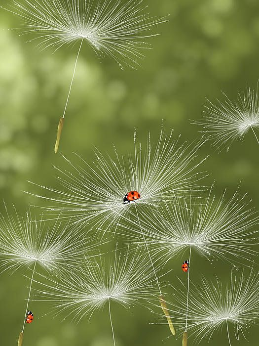Oh those Ladies... just hitchin' a ride... Ladybugs By Veronica Minozzi