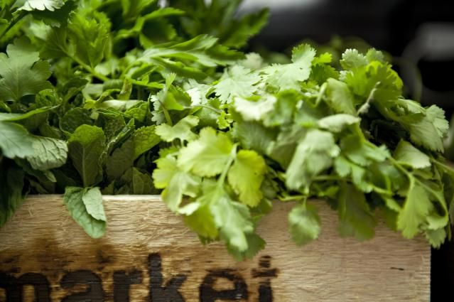 Freezing Cilantro is easy - and there are a few ways to do it!