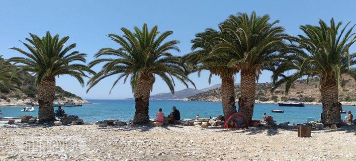 Η εξωτική πλευρά της Νάξου -Η παραλία με τους φοίνικες στην ακροθαλασσιά! [εικόνες] | iefimerida.gr