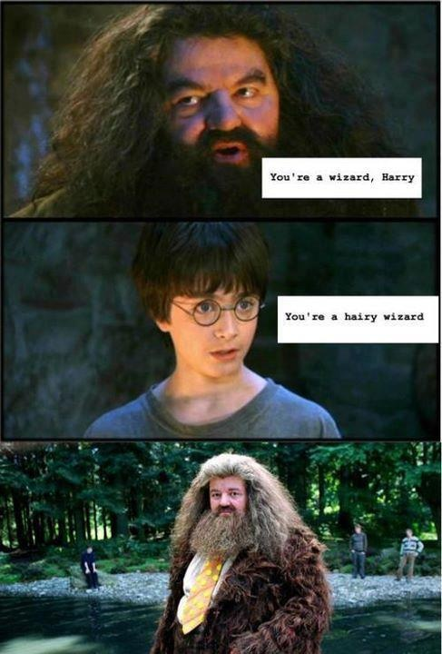 : Wizard Harry, Harrypotter, Wizards, Funny, You Re, Harry Potter, Hairy Wizard, Potter Humor