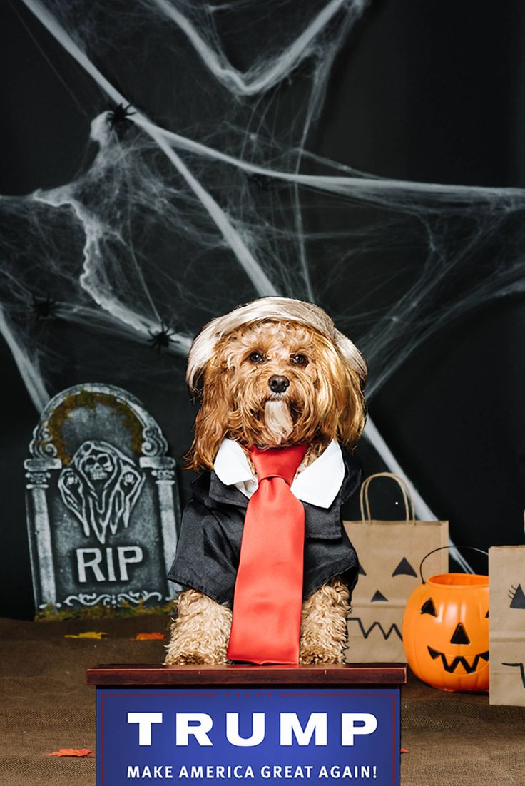 Are Dogs Smarter Than Cats? Dog costumes, Top 10