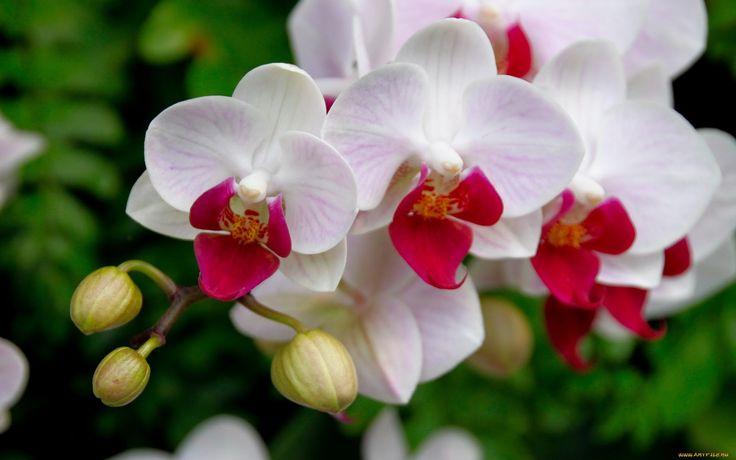 ... y más orquídeas.