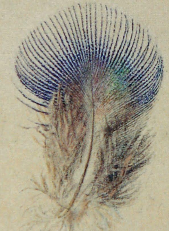 Study of a Peacock Feather (John Ruskin 1873)