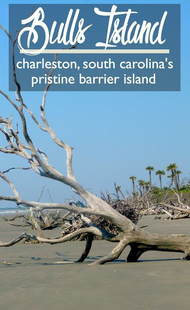 Bulls Island: Charleston, South Carolina's Pristine Barrier Island | Cosmos Mariners