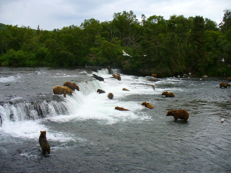 Brooks Lodge in Katmai National Park ~ we had an amazing week with the bears!