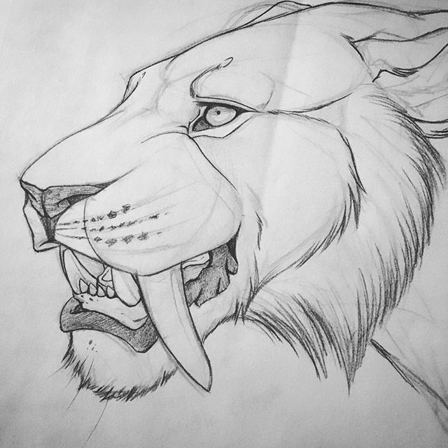 Sabertooth Designed From Lioness With Images Animal Drawings