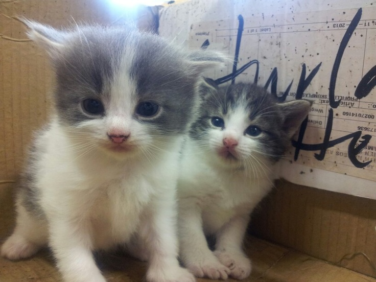 Two cute kittens :-)