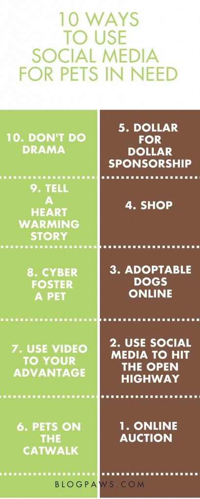 10 Ways to Use Social Media to Help Pets in Need - BlogPaws