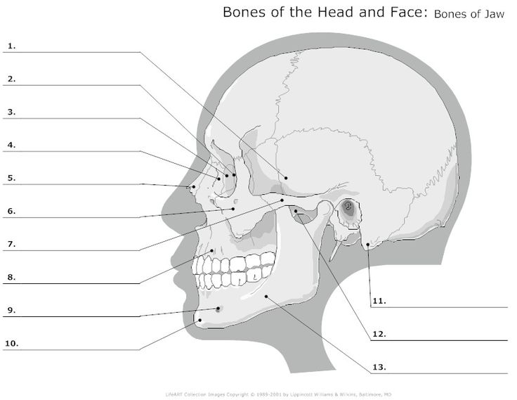 196 best education and study tips images on pinterest school bones of the head and face unlabeled fandeluxe Images