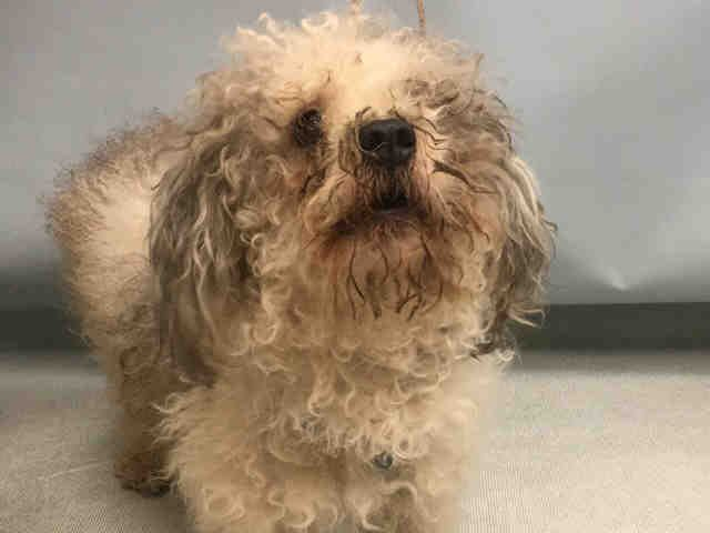 JIMMY - A1096856 - - Manhattan  Please Share:TO BE DESTROYED 11/17/16 **NEEDS A NEW HOPE RESCUE TO PULL** -  Click for info & Current Status: http://nycdogs.urgentpodr.org/jimmy-a1096856/