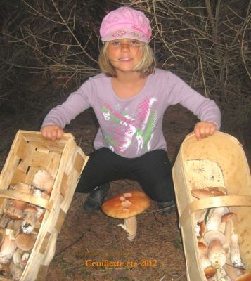 Couleurs gourmandes - chasse aux champignons