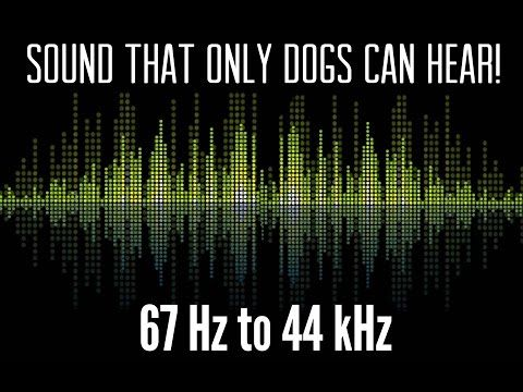 What S The Highest Frequency A Dog Can Hear