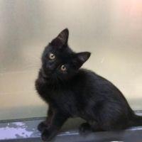 Cats Kitten adoption