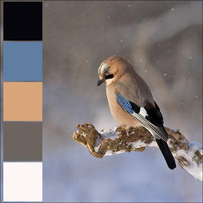 Zimowa paleta kolorów wygenerowana na podstawie fotografii.