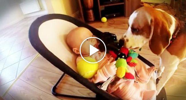 Cão Sente-se Culpado Por Fazer Bebé Chorar e Pede-lhe Desculpa De Forma Maravilhosa