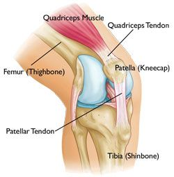Patellar Tendon Tear   http://www.osmsgb.com/Education.aspx  #kneeinjuries #patellartendontear #torntendon