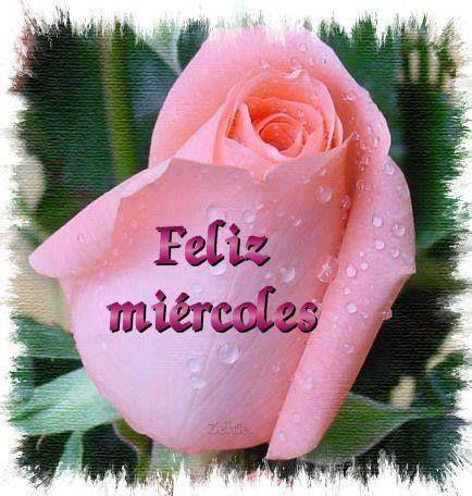 Hermoso rosa y Feliz Miércoles #dias_semana #xxxxxx