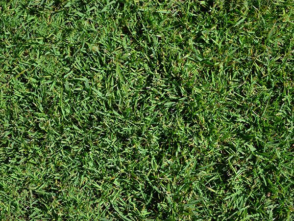 Region 2--Zenith: Zoysia grass grows in nearly any condition, from full sun to partial shade. The dark-green blades have a medium texture that's comfy underfoot and can withstand drought. $25 per pound; SeedSuperStore. See map here for your region.