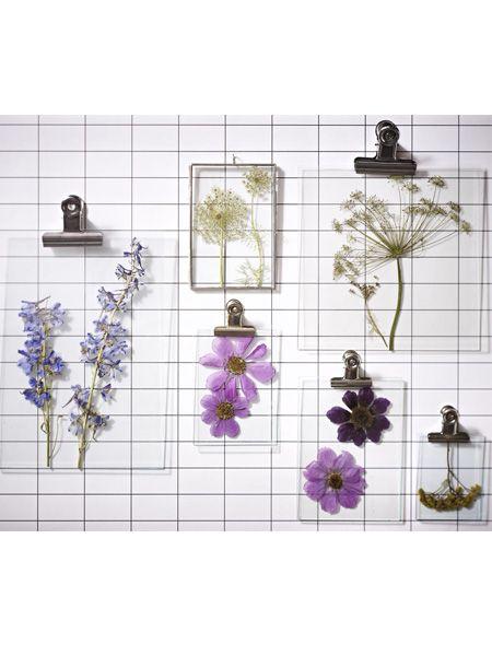 Ob an der Wand, als Geschenkdeko oder hübscher Briefbeschwerer - wir inszenieren getrocknete Blumen ganz neu.