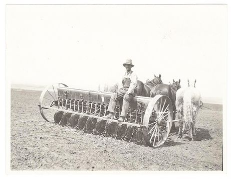 Through the Soldier Settlement Act, set up to assist returning servicemen after the first war, my godfather Colin Greener purchased a farm near Prongua, about 20 kilometres west of Battleford, Saskatchewan. And there he lived for the rest of his life. Here's a photo of him on his seeder, drawn by four horses, in 1930. (After his experiences overseas, he was pretty comfortable around horses.)