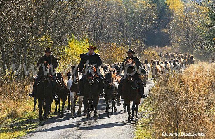II Dzień Koniarza w SKH Gładyszów w Regietowie fot.A.Deszczyńska Koń Polski 12/2013