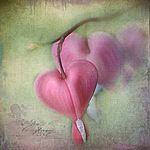 Мобильный LiveInternet От нежности замирая...Диалог влюблённых сердец | Lizzy Pe | mazita - Дневник mazita |