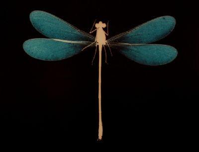 Anna Atkins (1799-1871), dragonfly.  More on Anna Atkins here: http://venetianred.net/2010/05/08/anna-atkins-mistress-of-blueprint-manor/