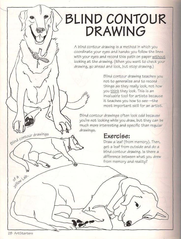 Blind Contour Line Drawing Tutorial : The best blind contour drawing ideas on pinterest