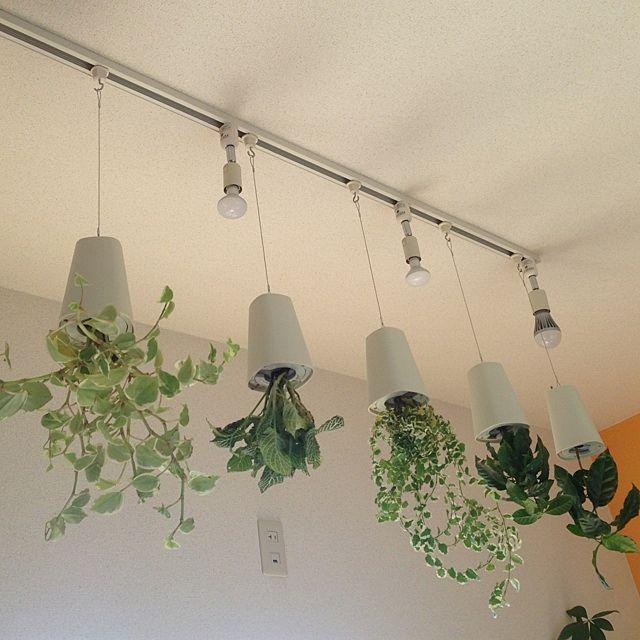 ボード 観葉植物 のピン